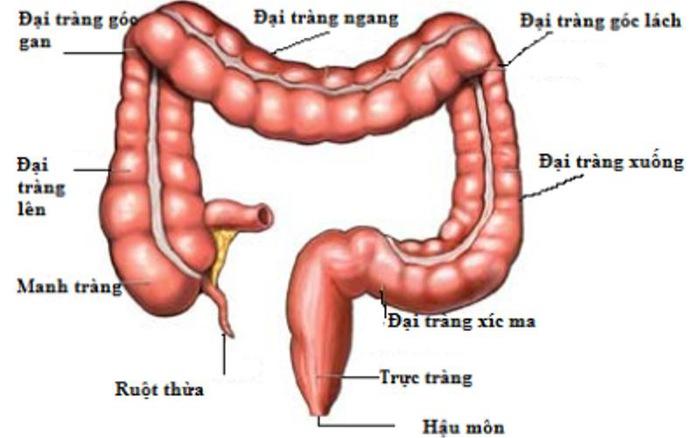 Nguyên nhân và cách điều trị viêm đại tràng co thắt